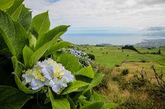 Auf der Azoren Insel Sao Miguel warten einige Abenteuer auf euch. Holt euch einen Mietwagen und startet einen Roadtrip über diese grüne Insel.