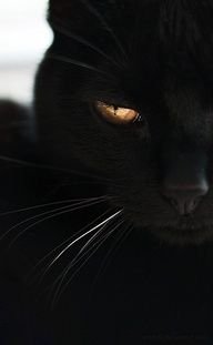 Black Cat with yellow Eyes. *-*