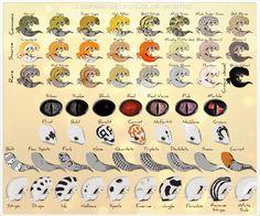 Leopard Gecko - Refference Sheet by Jasper-19