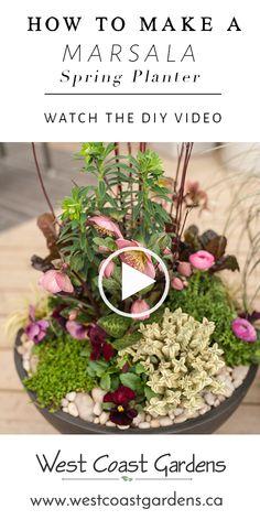Marsala Spring Container Planter | Garden Tips | West Coast Gardens