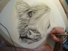 """Commission piece of a Scottish Highland cow. The client asked for a piece with """"some attitude"""" so I ad-libbed in the little sneer. Scottish Highland Cow, Highland Cattle, Scottish Highlands, Cow Paintings On Canvas, Animal Paintings, Pencil Art Drawings, Animal Drawings, Highland Cow Tattoo, Cow Sketch"""
