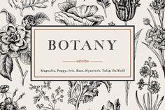 Botany. Card and set. Illustration. by olga.korneeva on @creativemarket