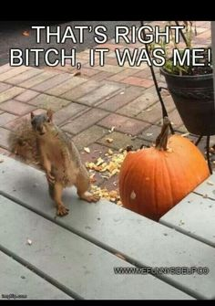HAHA! Damn squirrels! Ninja Squirrel, Funny As Hell, Vegetables, Adult Humor, Halloween, Funny Pictures, Funny Pics, Food, Funny Animals