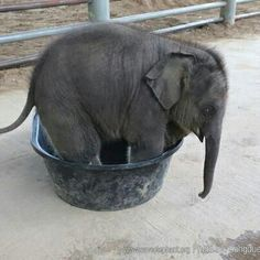 Look, the elephant fits!