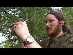 Wild Edible Plant Pine Cones (Male) - YouTube Edible Wild Plants, Headache Remedies, Wild Edibles, Pine Cones, Herbalism, Survival, Drink, Youtube, Food