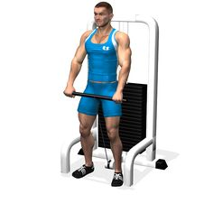 ONE ARM FRONT CABLE RAISE INVOLVED MUSCLES DURING THE TRAINING SHOULDERS