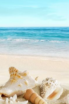 Shells on the beach calming photo beach pictures, beautiful beaches, strand, iphone wallpaper Seaside Beach, Ocean Beach, Sea And Ocean, Summer Beach, Sunny Beach, Beachy Wallpaper, Ocean Wallpaper, Summer Wallpaper Phone, Iphone Background Wallpaper