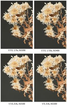 Images with different aperture, ISO, and shutter speed settings, but the same overall exposure