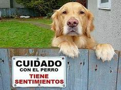 #frases #perros www.riverarce.es