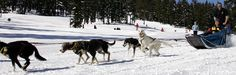 Dog sledding with Oregon Trail of Dreams out of Mt. Bachelor.  One hour trips for the whole family or 26 mile (5 hour) lunch trips for adults
