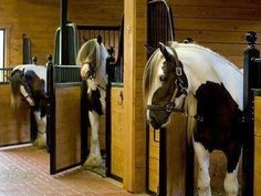 Gypsy Vanner Horses & stable