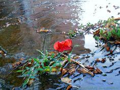 Piove. All'improvviso. L'acqua scende giù fitta. La gente corre a ripararsi. Eppure nulla può levare il mio sguardo da questo dettaglio:un piccolo fiore rosso. Nulla può farmi dimenticare che,anche se piove,intorno a me esiste un mondo a colori.