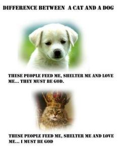 Difference between a Cat and a Dog These people feed me, shelter me and love me.they must be God. These people feed me, shelter me and love me.I must be God. Love My Dog, Puppy Love, Animal Memes, Funny Animals, Cute Animals, Animal Humor, Animal Quotes, Animal Pics, Hate Cats