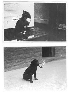 Cat and Dog, #cat, #dog, #cute, #animals