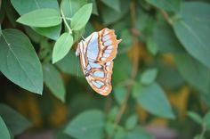 Here's a lovely little flutterby