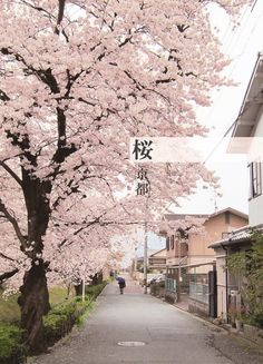 Sakura 櫻•桜• I would love to get married or walk around/ under the cherry blossoms ^_^
