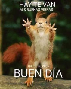 Increase Your Cardio & Watch Your Ripped Abs Develop! Spanish Humor, Spanish Quotes, Good Morning Good Night, Good Morning Quotes, Grettell Valdez, Humor Animal, Gato Gif, Funny Quotes, Funny Memes