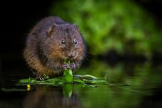 The best UK nature photography blogs - for beginners   Countryfile.com Nature Photography, Photography Blogs, Interesting Blogs, Image Makers, Creative Industries, Country Life, Farm Animals, Wildlife, Horses