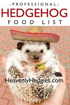 Combined expert opinions from hedgehog breeders and educators helped to form this hedgehog safe food recipes page to help you feed your hedgie. Hedgehog Supplies, Hedgehog Food, Hedgehog Care, Pygmy Hedgehog, Meal Worms, Dog Insurance, Dry Cat Food, Pet Treats, Pets