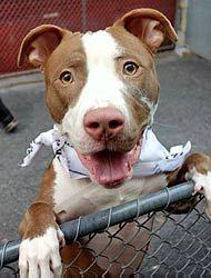 AmsterDog Animal Rescue - Saving Shelter Dogs - New York City Animal Rescue
