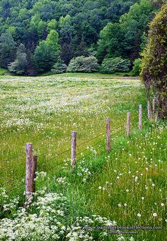 A field in Vermont!