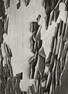 """Jerome 20 by Aaron Siskind. """"If you look very intensely and slowly, things will happen that you have never dreamed of before. Texture Photography, Close Up Photography, History Of Photography, Fine Art Photography, Aaron Siskind, Robert Frank, Gelatin Silver Print, Gcse Art, Detail Art"""