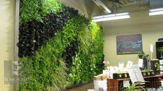 green-living-walls-installer-company-111