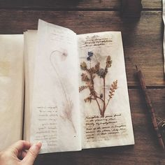 Thinking of keeping my own plant ID log/journal Arte Sketchbook, Witch Aesthetic, Nature Journal, Nature Study, Book Of Shadows, Journal Inspiration, Wicca, Botany, Dried Flowers