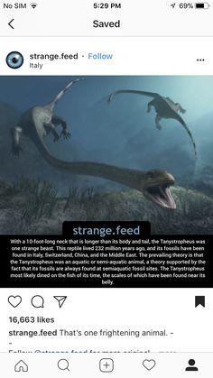 Weird Facts, Fun Facts, Dinosaur Era, Strange Beasts, Sims 5, Hilarious, Funny, Fossils, Imagination