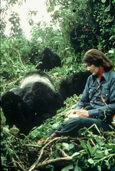 Dian Fossey observing Digit