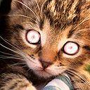 Evil Kitty...
