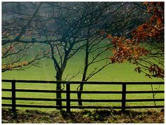 Fence- I like how it's grazed or mown on one side and not often mowed on the other.