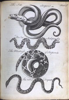 Sea Serpent, Sea Scolopendra, Mistress of Serpents, Natrix Torquata by Library & Archives @ Royal Ontario Museum, via Flickr