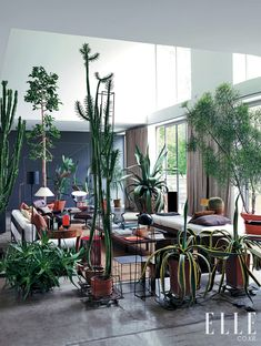 Great indoor cactus garden!