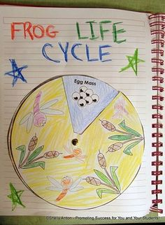 FREE!!! Frog Activities -  Frog Life Cycle Spinner - Great for science interactive notebook or as a stand alone craftivity!!!   ENJOY!!