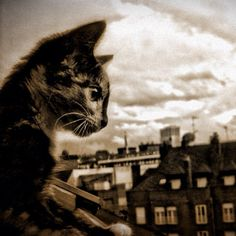 Cats in Photography