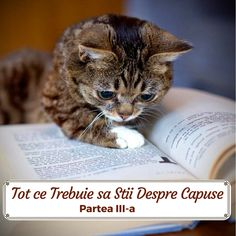 Things that make you go AWW! Like puppies, bunnies, babies, and so on. A place for really cute pictures and videos! Exotic Shorthair, All About Cats, Picture Quotes, Book Worms, Funny Cats, Cute Pictures, Cute Animals, Tips, Book Stuff