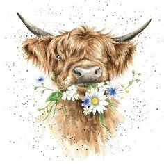 Highland Cow Painting, Highland Cow Art, Animal Paintings, Animal Drawings, Art Drawings, Highland Cow Tattoo, Cow Drawing, Images Kawaii, Image Deco