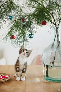 holiday pet photo ideas: cats staring at trees