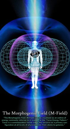The Morphogenic Field is a term we use to describe the field of energy around the body. It is an extension of the electrical energy of the nervous system. The brain is an electrical generator with its own field of energy that extends away from the physical body. Many cultures and disciplines recognize this field and give it other names. When people discuss auras, chakras, life force or chi, they are possibly talking about this same energy field.