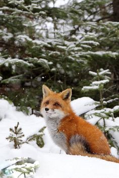 Mr Fox thinks the snowflakes are pretty magical
