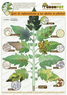 Enfermedades de las plantas                                                                                                                                                      Más