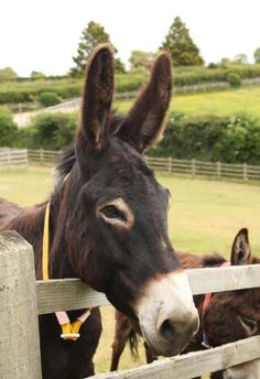 Opinion you women sleeps with donkey for council