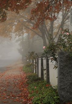 Love this photo of a misty autumn morning.acoastalpointofview: Foggy day on Westport Point Photo by Cheryl Sparks Autumn Morning, Autumn Cozy, Foggy Morning, Early Morning, Beautiful Places, Beautiful Pictures, Misty Day, Autumn Aesthetic, Fall Displays