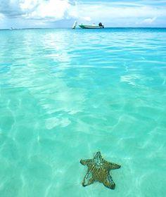 starfish, Turks and Caicos ocean caribbean living