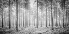 Nature at its best - Black & White Photography by Mark Little John - 121Clicks.com