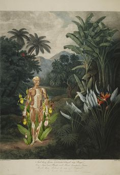 """""""walking in paradise"""" anatomical collage art by bedelgeuse"""