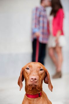 © Alice G Patterson Photography  - Philadelphia Engagement Session with Vizsla