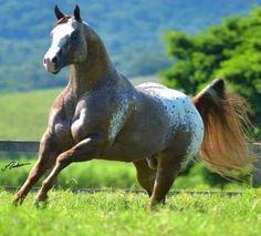 Quarter Horses, Appaloosa, Beautiful Horses, Surfing, Painting, Play, Memes, Horses, Animales