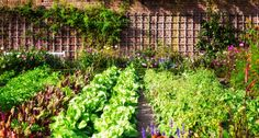 mediterraner garten hinterhof gestalten ideen How to Maintain a Beautiful Garden and Landscape Whene Vertical Vegetable Gardens, Vegetable Garden For Beginners, Starting A Vegetable Garden, Backyard Vegetable Gardens, Vegetable Garden Design, Veg Garden, Indoor Garden, Edible Garden, Garden Farm